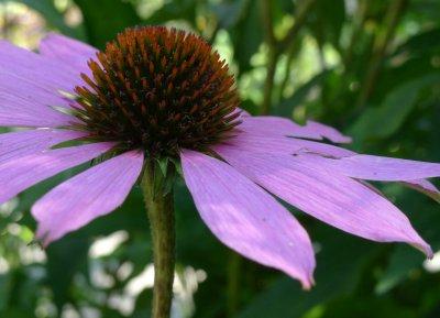 botanisk_5